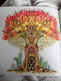 Enchanted Forest Johanna Basford Book In Stock Buy Now At