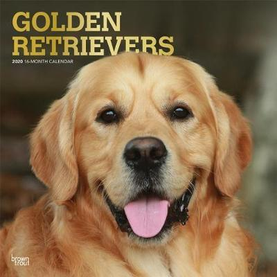 Golden Retrievers 2020 Square Foil Wall Calendar