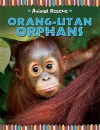 Animal Rescue: Orang-utan Orphans by Clare Hibbert