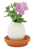 Eggling: Mini Plant Kit - Petunia