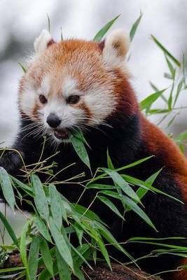 Mind Blowing Cute Little Red Panda Eating Bamboo 150 Page Lined Journal by Mindblowing Journals