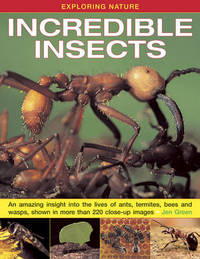 Exploring Nature: Incredible Insects by Jen Green