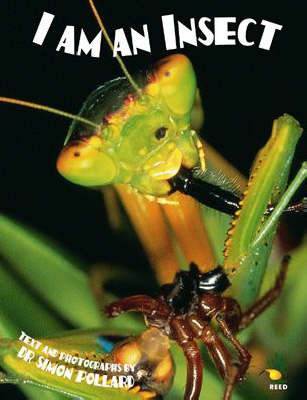 I I am an Insect image