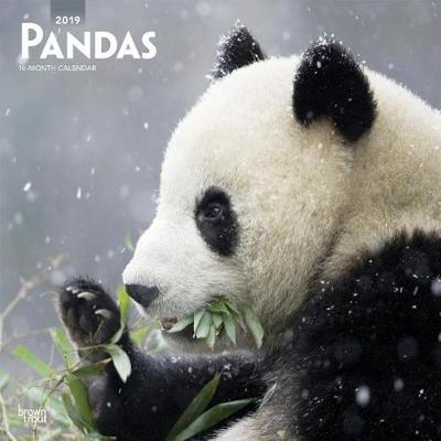 Pandas 2019 Square Wall Calendar by Inc Browntrout Publishers