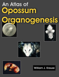 An Atlas of Opossum Organogenesis by William J. Krause