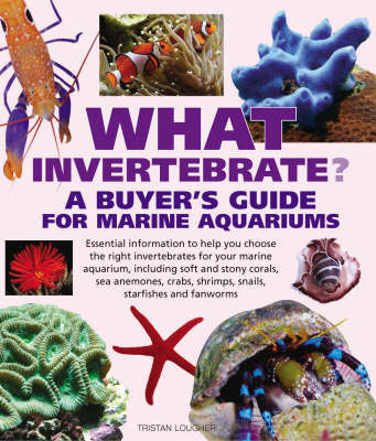What Invertebrate? by Tristan Lougher