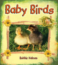 Baby Birds by Bobbie Kalman image
