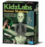 4M: Kidz Labs - Glow Human Skeleton Mold