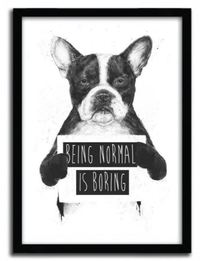 Balazs Solti Framed Illustration - Being Normal is Boring