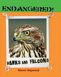 Hawks and Falcons by Karen Haywood image