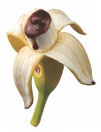 Destapa Banana - Banana Filler