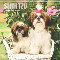 Shih Tzu 2018 Square Wall Calendar by Inc Browntrout Publishers