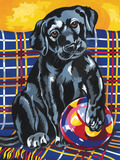Reeves Painting by Numbers Medium - Labrador