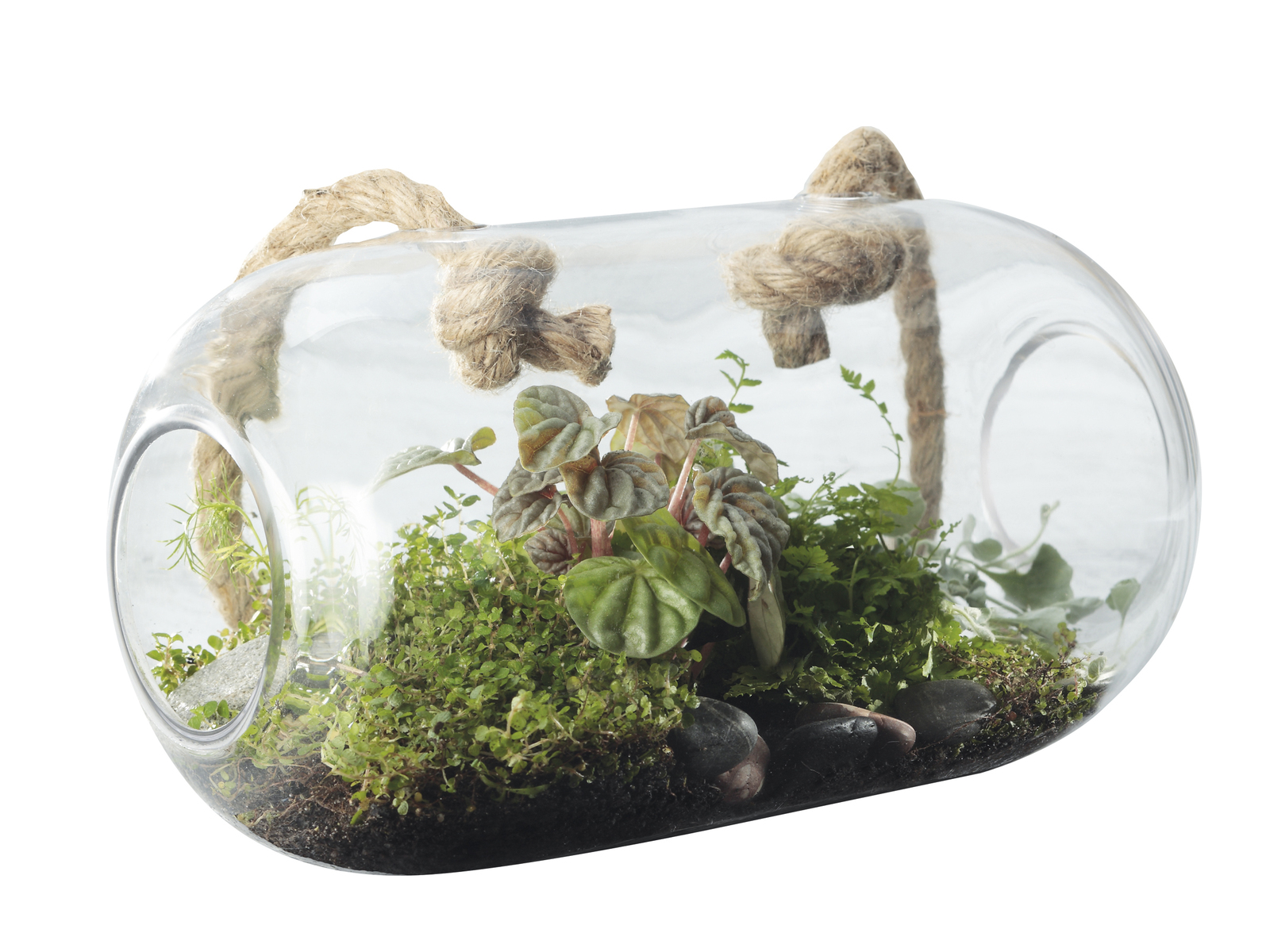 Maxwell Williams Little Jungle Terrarium Oval 26x15cm Images