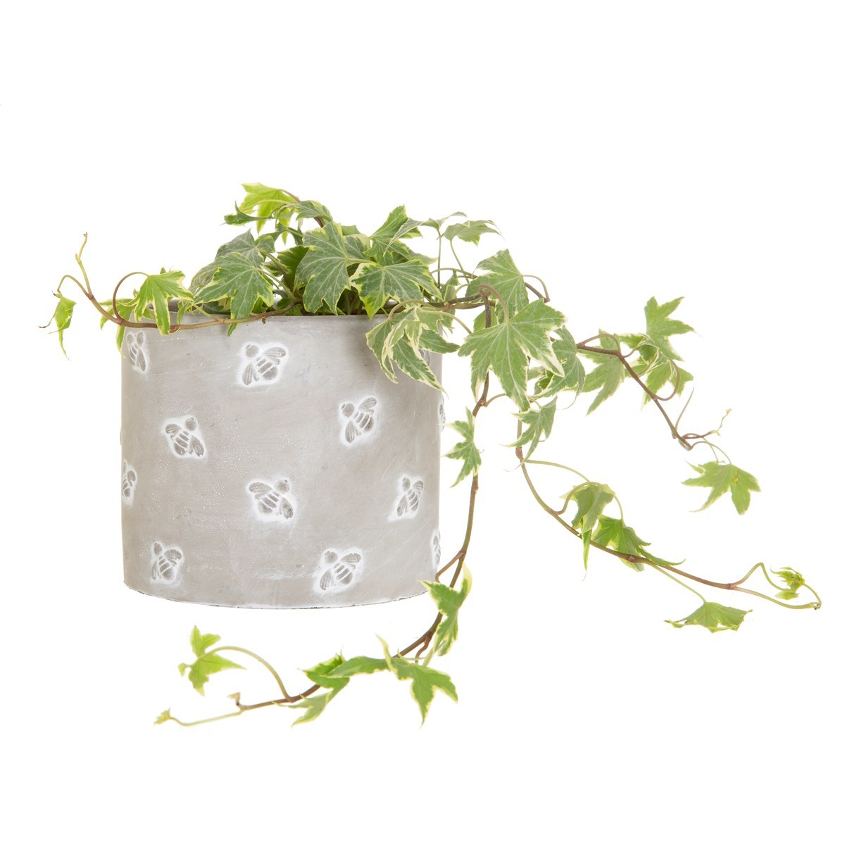 Sass & Belle: Queen Bee Cement Planter image