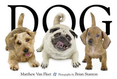 Dog by Matthew Van Fleet