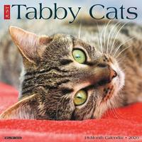 Just Tabby Cats 2020 Wall Calendar by Willow Creek Press image