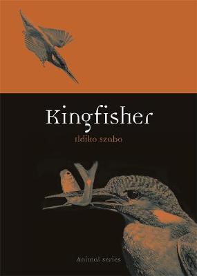 Kingfisher by Ildiko Szabo image