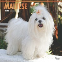 Maltese 2018 Square Wall Calendar by Inc Browntrout Publishers