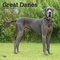 Great Danes Intl 2020 Square Wall Calendar by Inc Browntrout Publishers