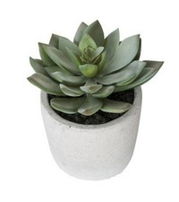 General Eclectic Artificial Plant - Small Echeveria image