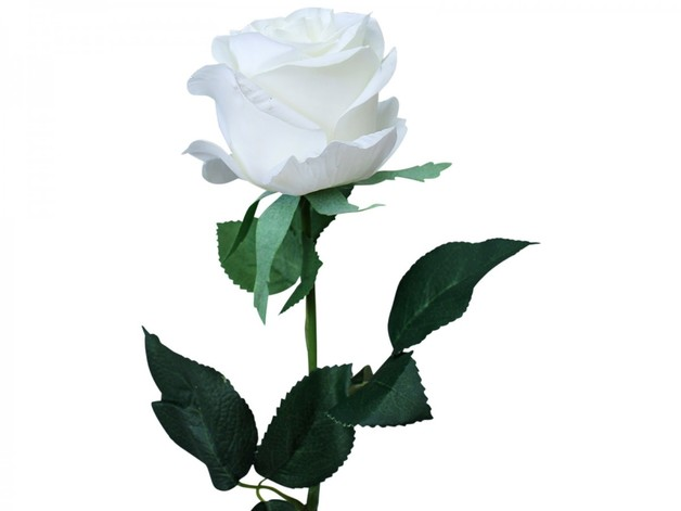 LaVida: Long Stem - Rose (White)