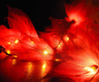 Short Story: LED String Lights - Red Lily