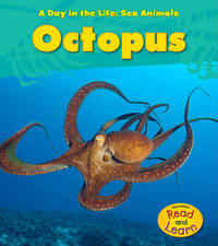 Octopus by Louise A Spilsbury