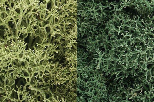 Woodland Scenics Light Green Mix Lichen