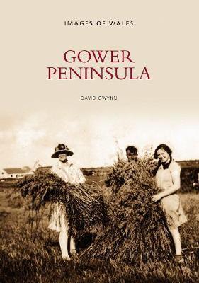 Gower Peninsula by David Gwynn image