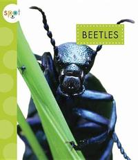 Beetles by Nessa Black image