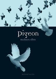 Pigeon by Barbara Allen