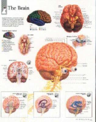 Brain by Scientific Publishing