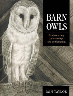 Barn Owls by Iain Taylor