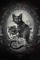 Alchemy (Paracelcus) Black Cat (719)