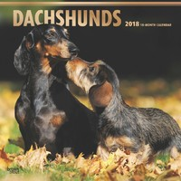 Dachshunds 2018 Square Wall Calendar by Inc Browntrout Publishers