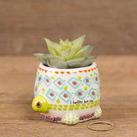 Natural Life: Critter Succulent - Turtle