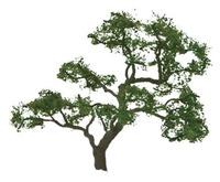 JTT: H0 Scale Beech Tree - 4 Pack