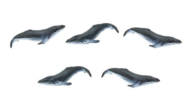 Safari: Good Luck - Mini Humpback Whale