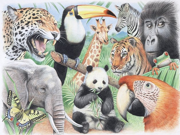 Buy Reeves Water Colour Pencil By Numbers Jungle Animals At