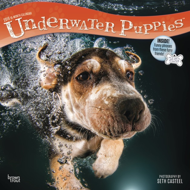 Underwater Puppies 2019 Square Wall Calendar by Inc Browntrout Publishers