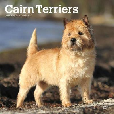 Cairn Terriers 2019 Square Wall Calendar by Inc Browntrout Publishers image