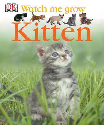 Kitten by Lisa Magloff