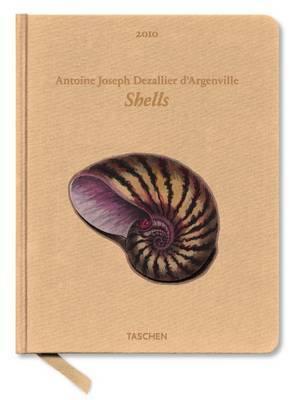 2010 Shells