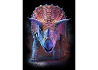 3D LiveLife Poster - Triceratops