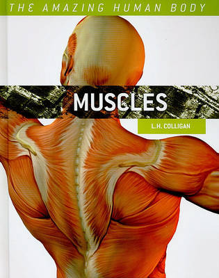 Muscles by L H Colligan