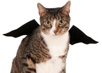 Rubie's: Bat Wings - Pet Costume - (Small/Medium)
