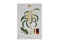 Maxwell & Williams: Royal Botanic Garden Tea Towel - Wattle (50x70cm)