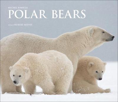 Polar Bears by Michel Rawicki