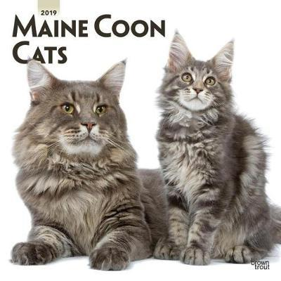 Maine Coon Cats 2019 Square Wall Calendar by Inc Browntrout Publishers image